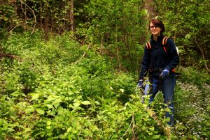 Eileen Eck controlling a garlic mustard population at Larue Pine Hills in southwest Illinois